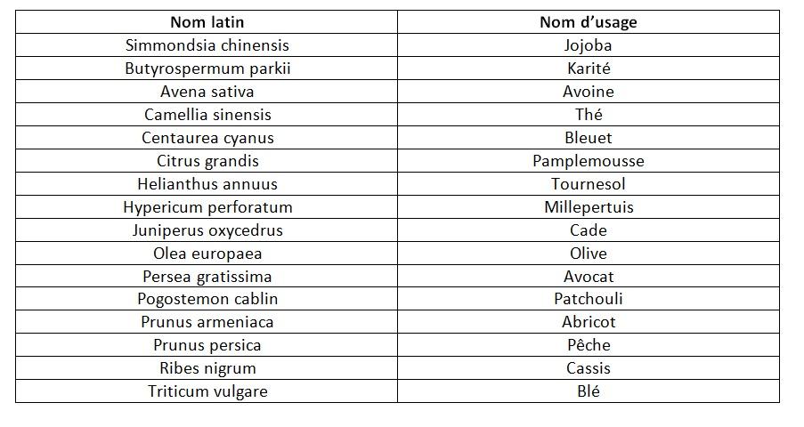 nom en latin